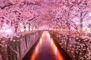 JAPAN U PROLJEĆE - MOĆNA MAGIJA PRIRODE